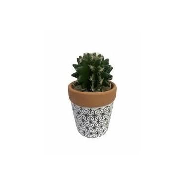 Cactus dans pot de terre...